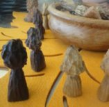 """Morels from """"That Fungi"""""""